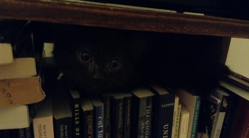 kittenbooks
