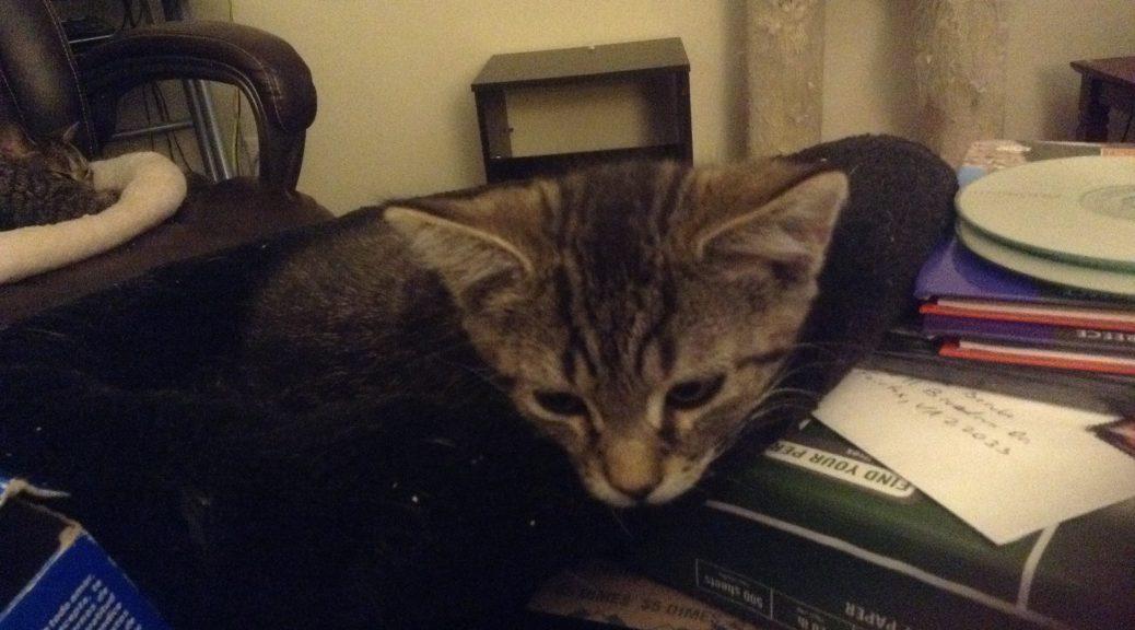 kittens 002